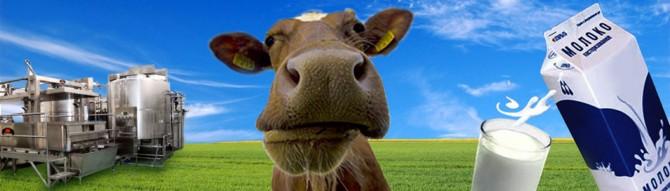 Два пути к успеху молочного производства